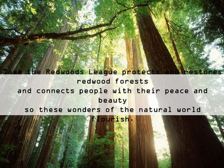 Save the Redwoods League protects and restores redwood forests and connects people with their peace and beauty so these wonders of the natural world flourish.