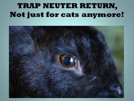 "TRAP NEUTER RETURN, Not just for cats anymore!. The need, the ""how to"" the challenges. Debby Widolf Rabbit Dept. Manager ________________ Best Friends."