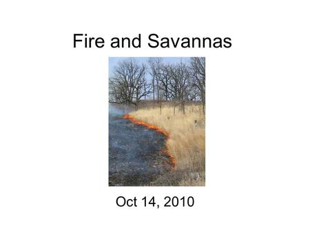 "Fire and Savannas Oct 14, 2010. What is a savanna? Scattered trees and sometimes shrubs Dense herbaceous understory Often an ""ecotone"""