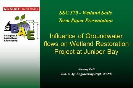 Influence of Groundwater flows on Wetland Restoration Project at Juniper Bay Swamy Pati Bio. & Ag. Engineering Dept., NCSU SSC 570 - Wetland Soils Term.