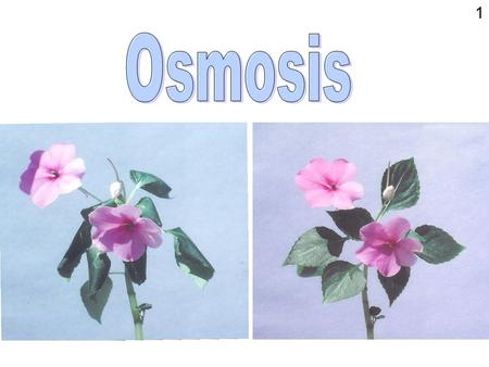 1. Osmosis is a special case of diffusion Osmosis involves the diffusion of water through a membrane The membrane may be artificial and non-living e.g.