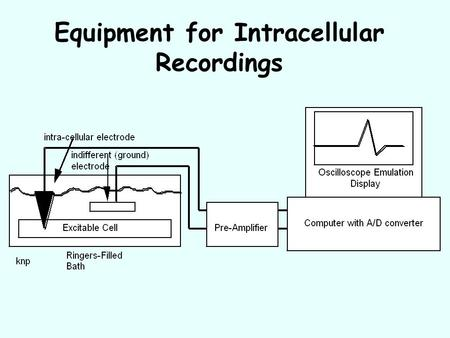 "Equipment for Intracellular Recordings. Extracellular Potential in a ""Resting"" Cell."