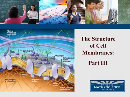 The Structure of Cell Membranes: Part III. The cell membrane is a dynamic and intricate structure that regulates material transported across the membrane.