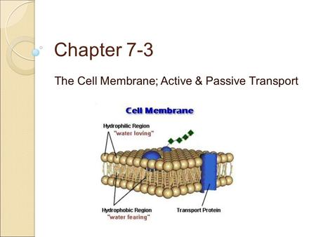 The Cell Membrane Gatekeeper