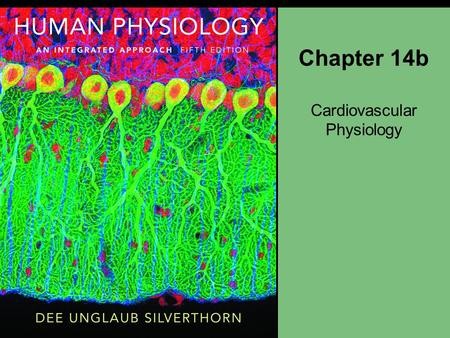 Chapter 14b Cardiovascular Physiology. Figure 14-15 Action Potentials in Cardiac Autorhythmic Cells Pacemaker potential - no resting -60mV drifts to -40.