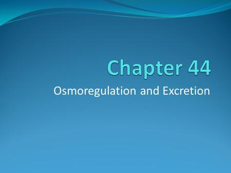 Osmoregulation and Excretion. Osmosis Over time the rates of water uptake and loss must balance. Osmosis- movement of water across a selectively permeable.