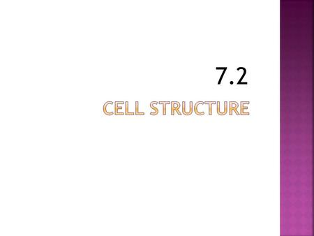 7.2. Cell divided into:  Cytoplasm (found outside the nucleus)  Nucleus.