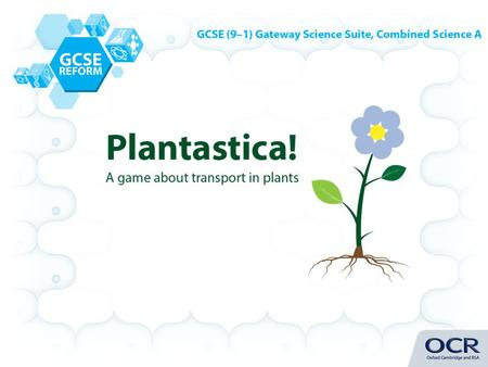 Build a plant by collecting a root, stem, leaves and a flower in a minimum of 5 moves by answering questions about transport in plants. Pick a different.