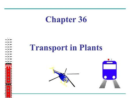 Chapter 36 Transport in Plants