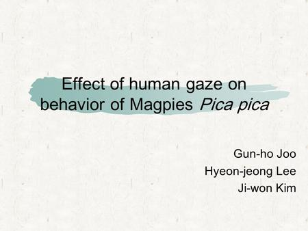 Effect of human gaze on behavior of Magpies Pica pica Gun-ho Joo Hyeon-jeong Lee Ji-won Kim.