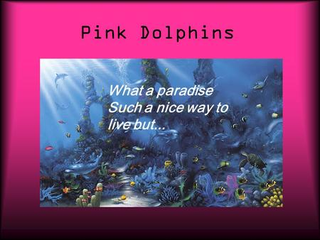 Pink Dolphins What a paradise Such a nice way to live but...