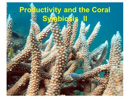 Productivity and the Coral Symbiosis II. dinoflagellates –chlorophylls a and c –lack chlorophyll b –characteristic dinoflagellate pigments diadinoxanthin.