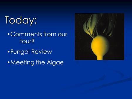 Today: Comments from our tour? Fungal Review Meeting the Algae.