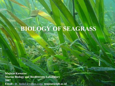 BIOLOGY OF SEAGRASS Mujizat Kawaroe Marine Biology and Biodiversity Laboratory 2007