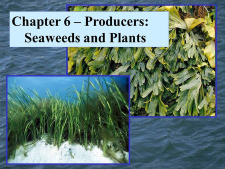 Chapter 6 – Producers: Seaweeds and Plants. The Domains of Life.