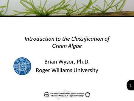 1 Introduction to the Classification of Green Algae Brian Wysor, Ph.D. Roger Williams University.