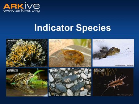 Indicator Species. What is an indicator species? A species whose presence, absence or abundance reflects a specific environmental condition, habitat or.