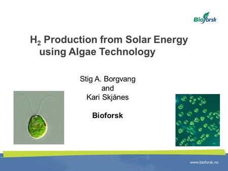 H 2 Production from Solar Energy using Algae Technology Stig A. Borgvang and Kari Skjånes Bioforsk.