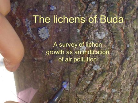 The lichens of Buda A survey of lichen growth as an indication of air pollution.