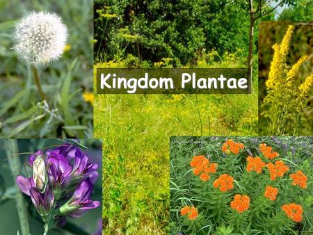 biology kingdom plantae In biology , kingdom ( latin : regnum , plural regna ) is the third highest taxonomic rank , just below domain  kingdoms are divided into smaller groups called phyla.