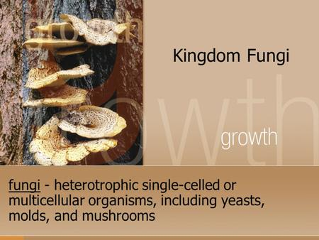 Kingdom Fungi fungi - heterotrophic single-celled or multicellular organisms, including yeasts, molds, and mushrooms.