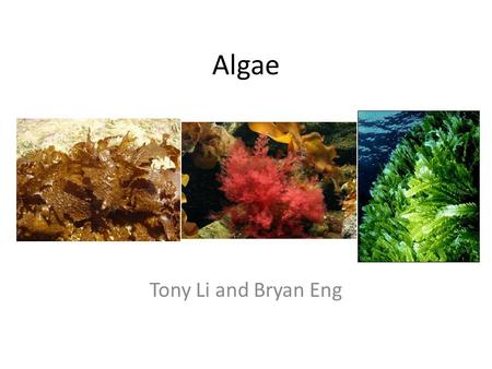Algae Tony Li and Bryan Eng. Parts of an alga Thallus: seaweed body Holdfast: anchors the alga Stipe: stemlike part used for support Blade: leaflike,
