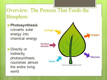 Overview: The Process That Feeds the Biosphere  Photosynthesis converts solar energy into chemical energy  Directly or indirectly, photosynthesis nourishes.