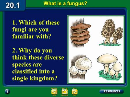 20.1 Section Objectives – page 529 1. Which of these fungi are you familiar with? 2. Why do you think these diverse species are classified into a single.