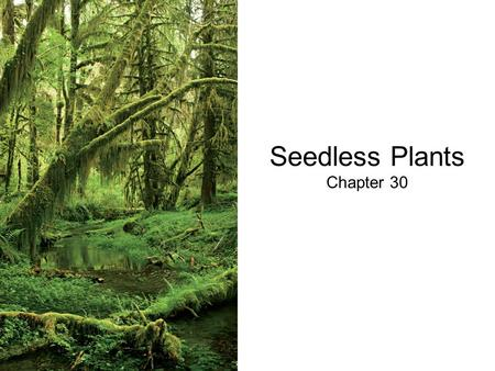 Seedless Plants Chapter 30. Origin of Land Plants All green algae and the land plants shared a common ancestor a little over 1 BYA –Kingdom Viridiplantae.