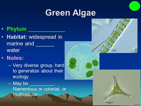 Green Algae Phylum ____________ Habitat: widespread in marine and ______ water Notes: –Very diverse group, hard to generalize about their ecology –May.
