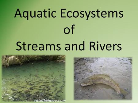 Aquatic Ecosystems of Streams and Rivers. I. Life in the Streams A.Plants and animals living in the fast moving water of streams and rivers have developed.