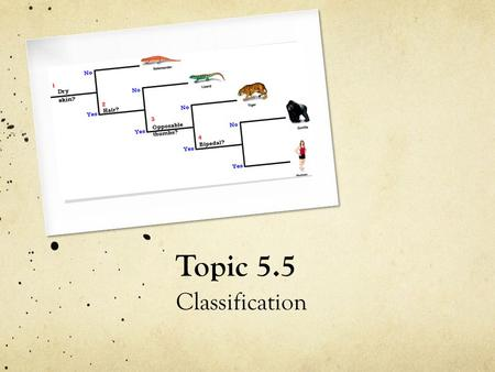 Topic 5.5 Classification. Why Classify? 1. How many 'different sorts' of living things are there on the planet?