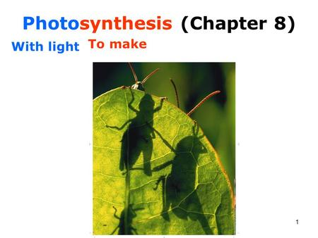 Photosynthesis (Chapter 8)