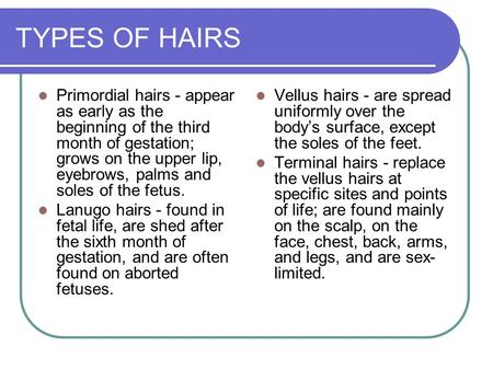 TYPES OF HAIRS Primordial hairs - appear as early as the beginning of the third month of gestation; grows on the upper lip, eyebrows, palms and soles of.