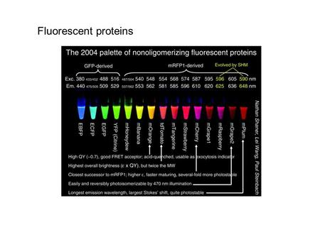 Fluorescent proteins. Excitation and Emission Wavelengths of AFP proteins.
