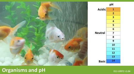 Basic Neutral Acidic pH 1 2 3 4 5 6 7 8 9 10 11 12 13 14 Organisms and pH 012-10972 r1.04.