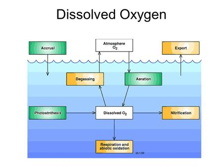 Dissolved Oxygen The presence of oxygen gas molecules (O 2 ) in the water. It's important for aquatic animals and plants during respiration. Important.