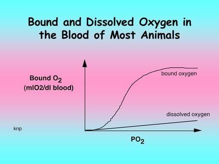 Bound and Dissolved Oxygen in the Blood of Most Animals.