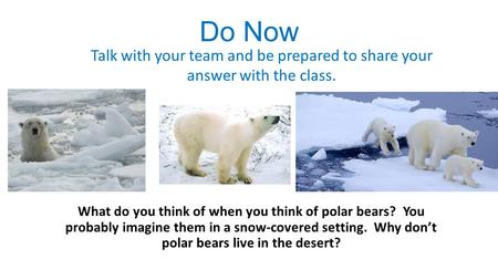 Do Now What do you think of when you think of polar bears? You probably imagine them in a snow-covered setting. Why don't polar bears live in the desert?