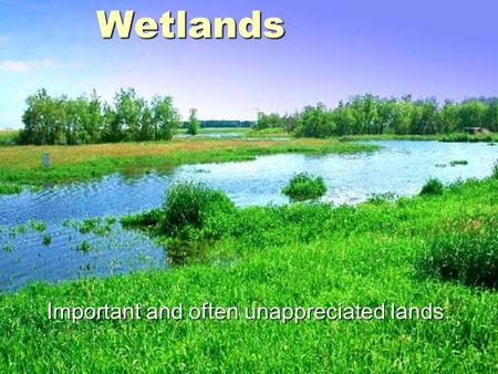 Wetlands Important and often unappreciated lands..
