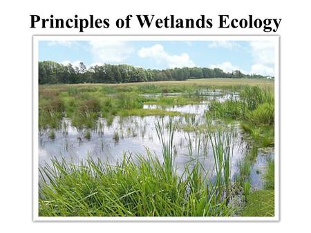 Principles of Wetlands Ecology. Topics covered in this lecture Wetland status and trends, causes of losses. Definitions and criteria used to identify.