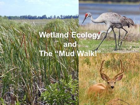 "Wetland Ecology and The ""Mud Walk!"". Over 70% of Earth is covered by Water!!!"