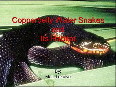Copperbelly Water Snakes and Its Habitat By: Matt Tekulve.