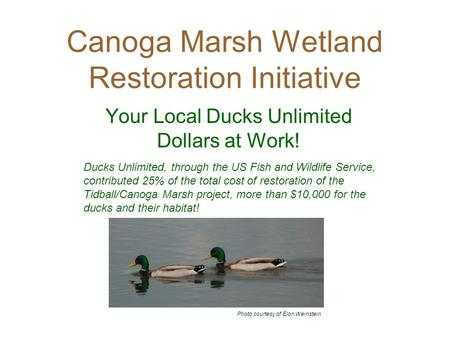 Canoga Marsh Wetland Restoration Initiative Your Local Ducks Unlimited Dollars at Work! Ducks Unlimited, through the US Fish and Wildlife Service, contributed.