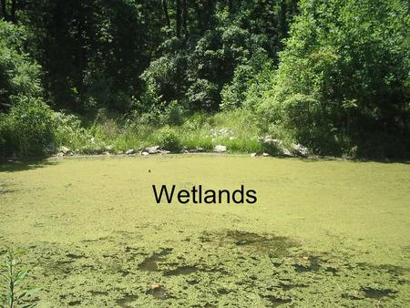 Wetlands. What is a wetland? There are three characteristics that describe a wetland: 1.Hydrology –There must be water at or near the surface of the land.