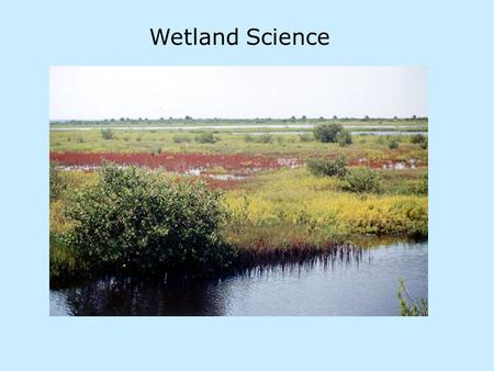 Wetland Science. Wetland scientists examine: - biology - characteristic plants and animals, microorganisms of different wetland types - vulnerability.