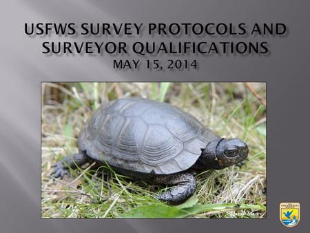 Suzanne Macey.  DEC looks at known occurrences with 1 mile  FWS looks at known occurrences plus the potential for suitable habitat  Contact DEC and/or.