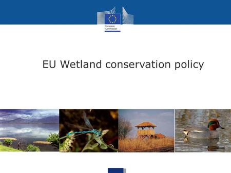 EU Wetland conservation policy. Communication on the Wise Use and Conservation of Wetlands (1995) => first European document dedicated exclusively.