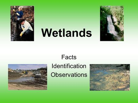 Wetlands Facts Identification Observations. Did you know?  In the 1600s, an estimated 200 M acres of wetland existed in 48 states, by the mid 1970s only.