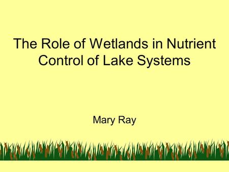 The Role of Wetlands in Nutrient Control of Lake Systems Mary Ray.